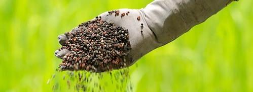 Dusičnany v dusíkatých hnojivách.